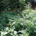Adam Guerrero's Garden